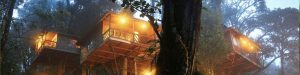 Kerala Tree House Packages